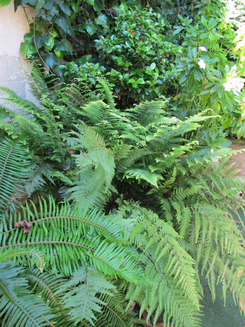 - garden-ferns-001