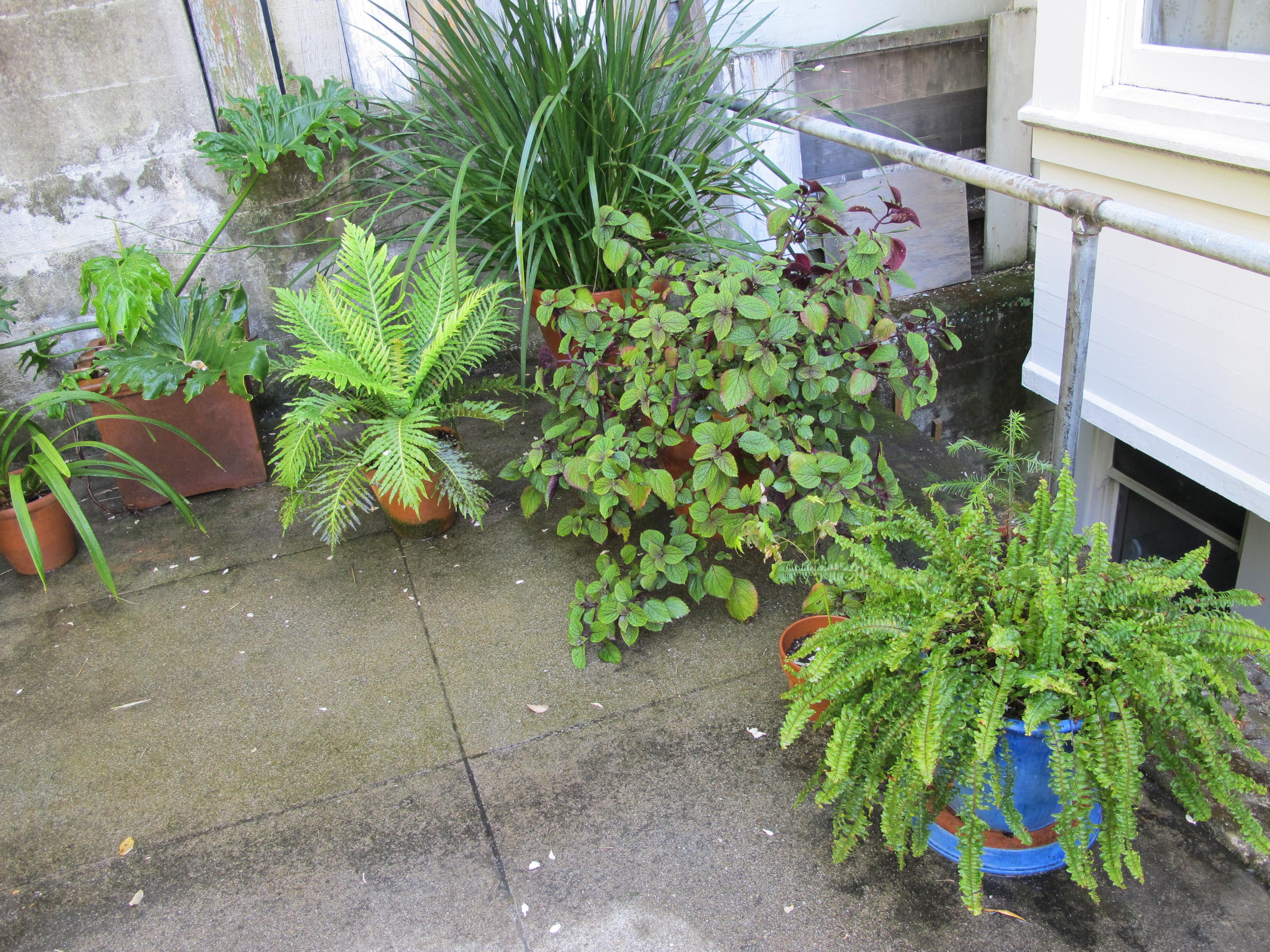 Feng Shui Backyard Plants : Good Feng Shui Container Gardening  Susan Levitt