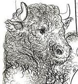 Taurus by Picasso