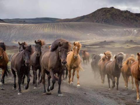 horses great hair