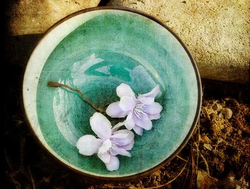 empty_bowl