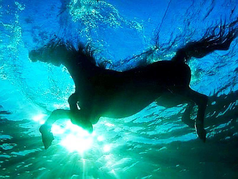 water horse pic